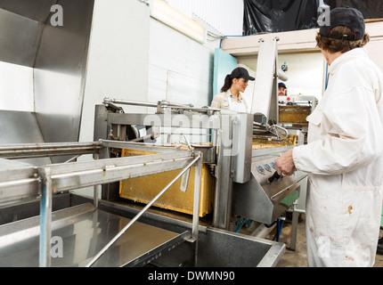 Beekeepers Working On Honey Extraction Plant - Stock Image