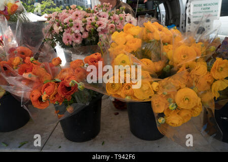 Ranunculuses for sale in the Union Square Farmers' Market in Manhattan. Union Square is a historic park with large farmers' markets four days a week. - Stock Image