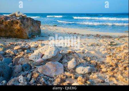 Macro Beach Detail - Stock Image