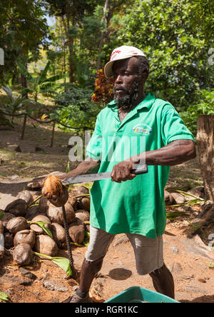 Man opening coconuts with a machete. Mourne Coubaril Estate, Saint Lucia. - Stock Image