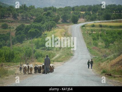 SHepherd and flock on the road near Ardakan, Fars Province, Iran - Stock Image