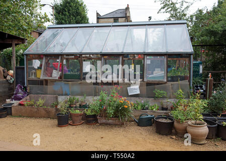 Greenhouse with pots and flowers in front, King Henry's Walk Garden, London Borough of Islington England Britain UK - Stock Image
