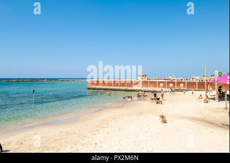 Israel, Tel Aviv - 24 September 2018: Dog beach - Stock Image