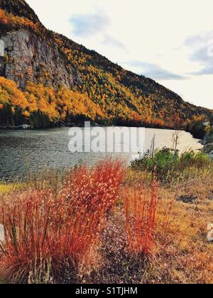 Fall colour plants and trees with lake and mountain view - Stock Image