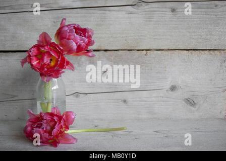 Pink Dutch peony tulips in glass bottle, on old wooden background with petals - Stock Image