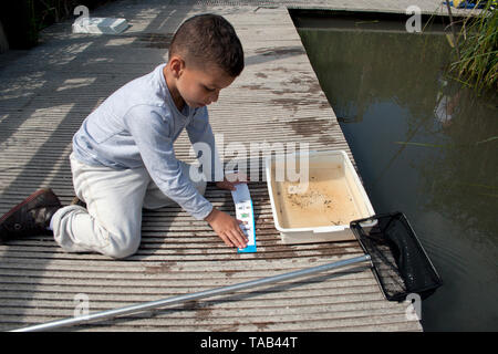 Pond Dipping, Young boy with pond life in tray and identification card, Wildfowl & Wetlands Trust, Arundel, West Sussex, England, UK - Stock Image