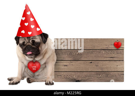 grumpy Valentines's day pug dog puppy with party hat sitting down next to wooden sign, isolated on white background - Stock Image
