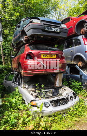A stack of 3 cars partially dismantled in a breakers scrapyard with weeds and vegetation growing up around them - Stock Image
