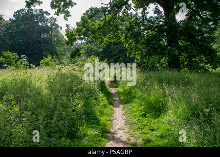 Footpath through the countryside - Stock Image