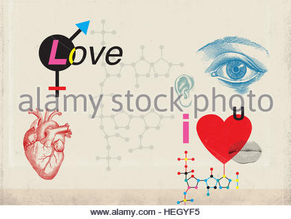 Love diagram equation sexuality chemical attraction senses relationship feeling sexual sensual Illustration - Stock Image