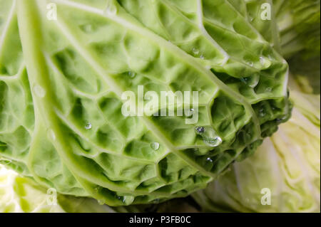 Close-up of fresh green Chinese cabbage with water droplets at the Farmer's Market - Stock Image