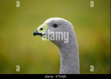 Bird - Stock Image