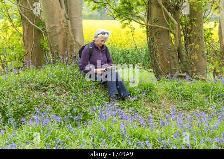 Mature woman sitting on bank, resting while on a walk in woodland among Bluebells, Hyacinthoides non-scripta, Sussex, UK, - Stock Image