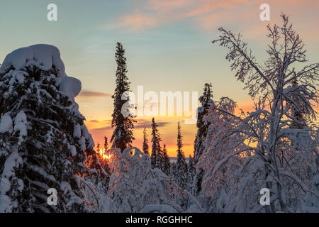 Winter landscape in direct light at sunset with nice color in the sky and snowy trees, Gällivare county, Swedish Lapland, Sweden - Stock Image