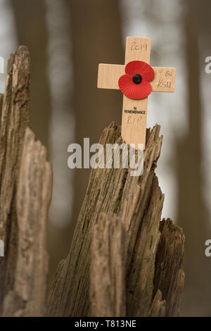 Poppy Cross on War Damaged Tree from a WWI battlefield. - Stock Image