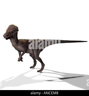 dinosaur Pachycephalosaurus - Stock Image