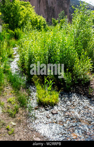 Park with green plants and El Rito de los Frijoles river on Main Loop trail path in Bandelier National Monument in New Mexico - Stock Image