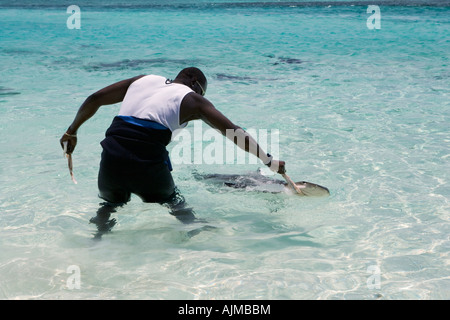 Powerboat Adventure staff using bait to attract sharks - Stock Image