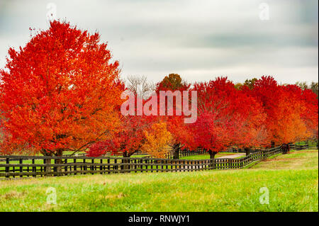 Fall colors in Autumn - Stock Image
