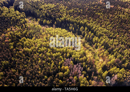 Deep dark forest aerial view. Toned image - Stock Image