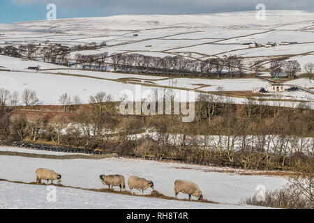 North Pennines AONB Landscape. Towards Ettersgill, Teesdale with a covering of snow and bright winter sunshine - Stock Image