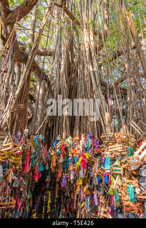 Vertical view of a wishing tree in Rameswaram, India. - Stock Image