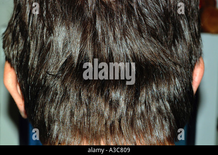 a head of hair - Stock Image
