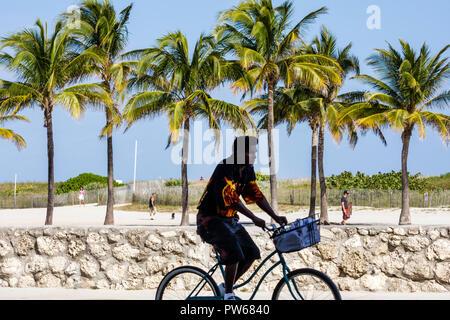 Miami Beach Florida Lummus Park silhouette man bicycle biking palm trees sand coral wall oolite sport physical activity leisure - Stock Image