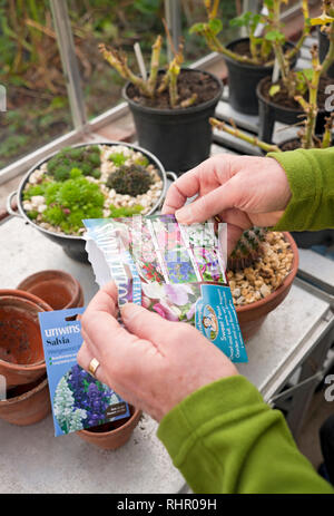 Man sorting through packets of flower seeds in the greenhouse England UK United Kingdom GB Great Britain - Stock Image