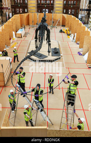 Glasgow, Scotland, UK. 18th Jan 2019. The Natural History Museum London's famous diplodocus arrived at Kelvingrove Art Gallery and Museum, Glasgow where a team of specialists delicately unpacked the 292 bone structure and began piecing the 21.3 meter long diplodocus together. The skeleton is part of a 'Dippy on Tour, Natural History Adventure' exhibition opening to the public on 22 January Credit: Findlay/Alamy Live News - Stock Image