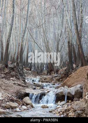 Mountain creek in winter woodland, Ghalat, Shiraz, Iran - Stock Image