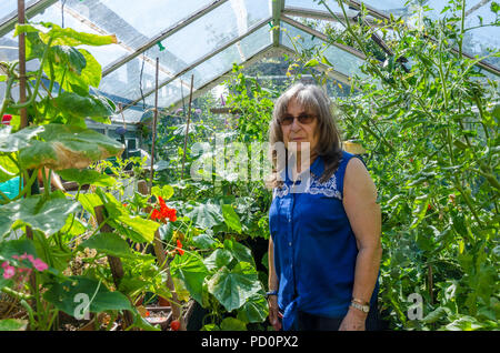 A lady surveys the tomato and cucumber plants that are growing in her greenhouse. - Stock Image