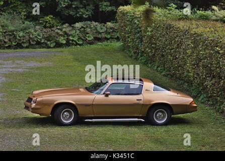 Golden Camara Berlinetta with T-Top - Stock Image