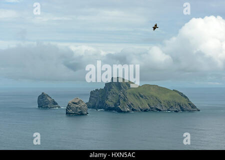 """Island of Boreray, Stac Lee and Stac an Armin in the Saint Kilda archipelago, seen from Hirta. Great skua or """"bonxie"""" - Stock Image"""