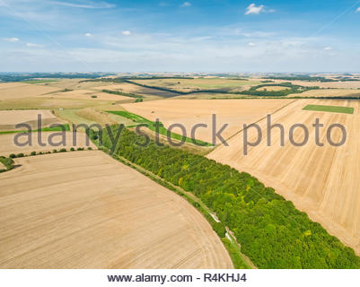 Aerial landscape of summer wheat and barley field crops for harvest, forest woodland trees and blue sky on farm - Stock Image