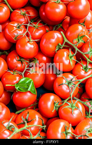 Little red tomatoes on the fresh market in France - Stock Image