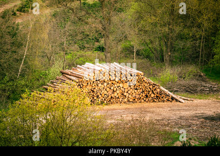 Large woodstack in a forest surrounded by trees in the spring - Stock Image