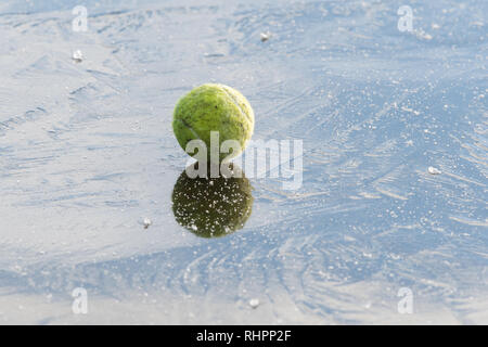Ball on ice - Dog's tennis ball on frozen pond - to illustrate the dangers of dogs running onto frozen water - Stock Image