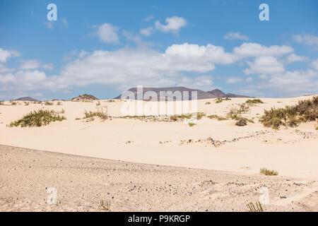 Dunes in Corralejo Natural Park on Fuerteventura, Canary Islands - Spain - Stock Image