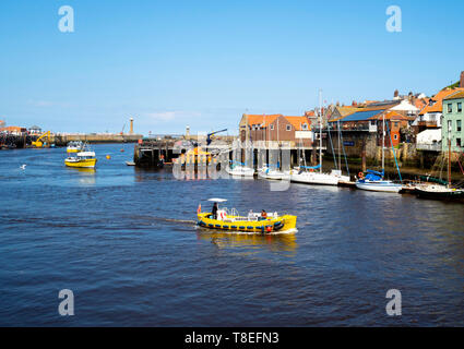 The Summer Queen Esk Belle III and Dash yellow  pleasure boats in Whitby Harbour on a sunny spring day. - Stock Image