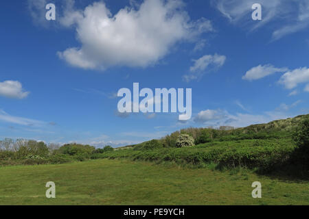 rough pasture behind coastal sand dunes  Eccles-on-Sea, Norfolk,       May - Stock Image