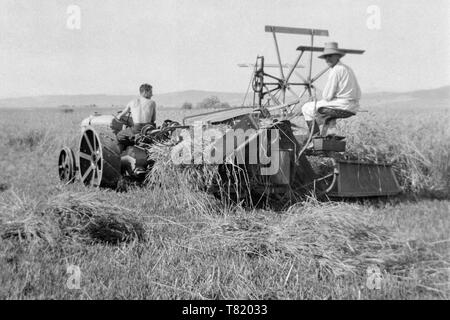 two men using an old tractor and reaper binder machine at harvest time 1930s hungary - Stock Image