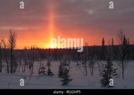 Winter landscape in direct light, shining through trees in a forest and sun pillar shooting up in the sky, snow is in the air,  Gällivare, Swedish Lap - Stock Image