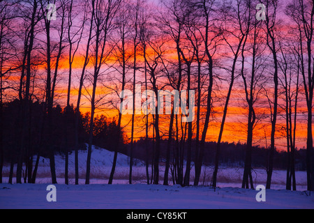 Sun setting behind a line of bare trees in winter. - Stock Image