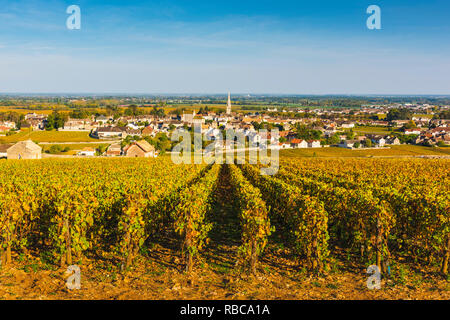 France, Bourgogne-Franche-Comte, Burgundy, Cote-d'Or, Meursault. - Stock Image