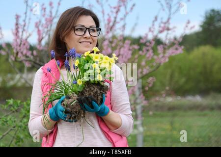 Outdoor portrait of smiling middle-aged woman in garden gloves with flowers for planting, spring flowering garden background, copy space. - Stock Image