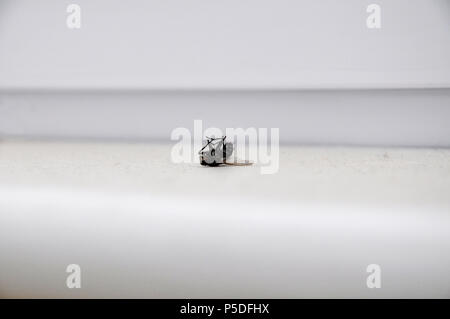 A close up shot of a dead fly. - Stock Image