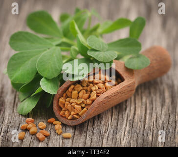 Fenugreek seeds with green leaves on wooden surface - Stock Image