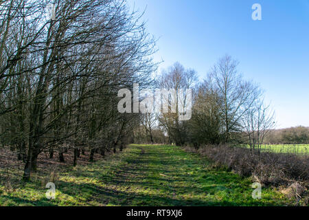 Countryside footpaths on a warm winter sunny day in February, Hertfordshire, UK - Stock Image