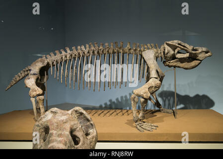 The Field Museum, Chicago, Illinois, USA. - Stock Image